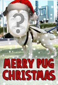 Merry Pug Christmas